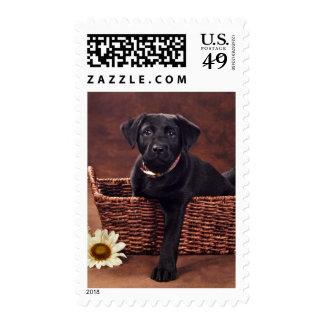 Black Labrador Puppy Dog Stamp