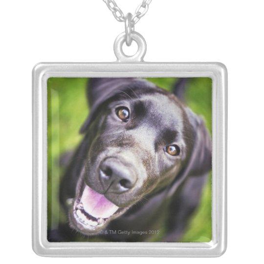 Black labrador puppy looking upwards, close-up silver plated necklace