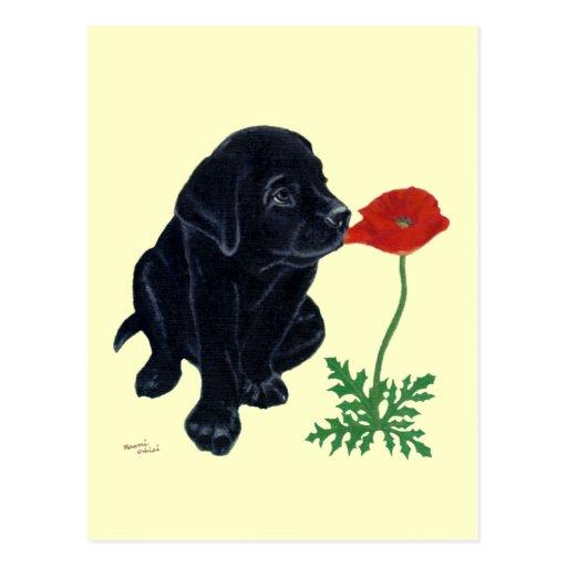 Black Labrador Puppy Postcards