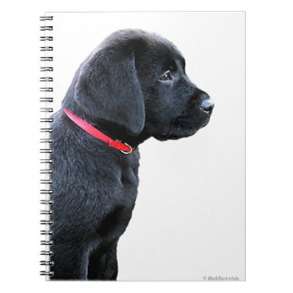 Black Labrador Puppy Spiral Notebook