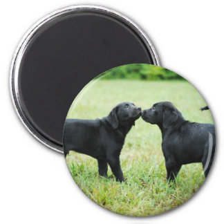 Black Labrador Retriever 2 Inch Round Magnet