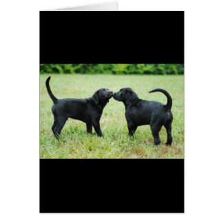 Black Labrador Retriever Card