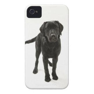 Black labrador retriever iPhone 4 cover