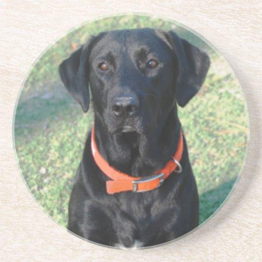 Black Labrador Retriever Coaster