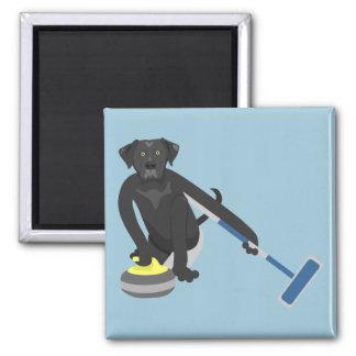 Black Labrador Retriever Curling 2 Inch Square Magnet