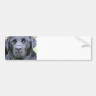 Black Labrador Retriever Dog Bumper Sticker