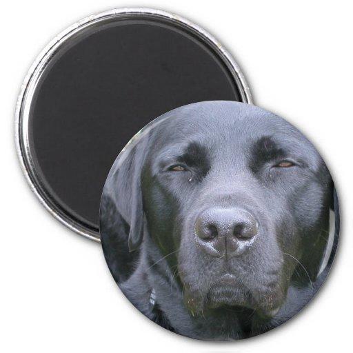 Black Labrador Retriever Dog Magnet Refrigerator Magnet