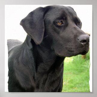 Black Labrador Retriever  Dog Poster Print