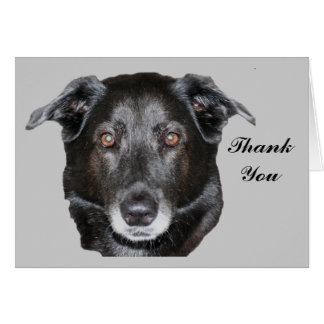 Black Labrador Retriever Dog Thank You Card
