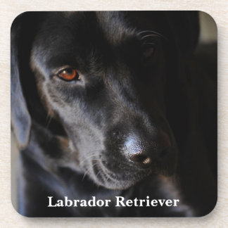 Black Labrador Retriever Drink Coaster