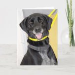 Black Labrador Retriever Mix Greeting/Note Cards