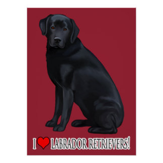 Black Labrador Retriever Portrait Poster