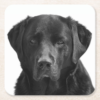 Black Labrador Retriever Puppy Dog Square Paper Coaster