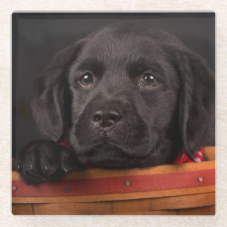 Black labrador retriever puppy in a basket glass coaster