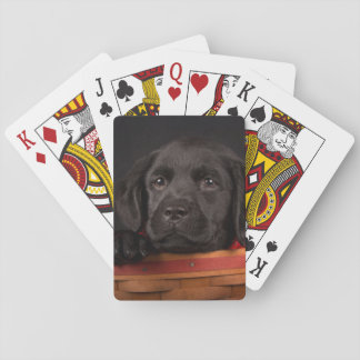 Black labrador retriever puppy in a basket playing cards
