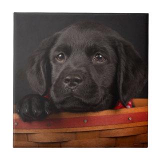 Black labrador retriever puppy in a basket small square tile