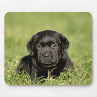 Black labrador retriever puppy mouse pad