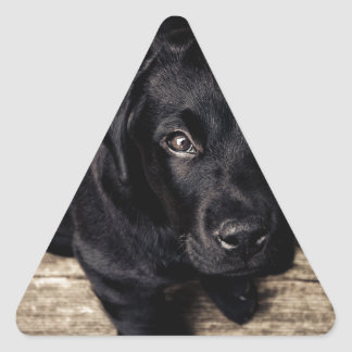 Black Labrador Retriever Puppy on Wood Triangle Sticker