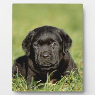 Black labrador retriever puppy plaque