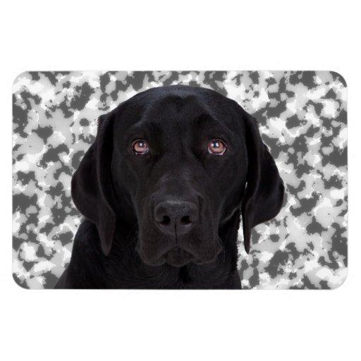 Black Labrador Retriever Rectangular Photo Magnet