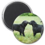 Black Labrador Retriever Refrigerator Magnet