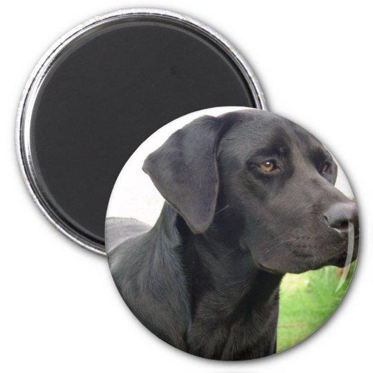 Black Labrador Retriever Round Magnet