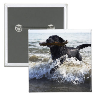 Black Labrador retriever running through surf, Pinback Button