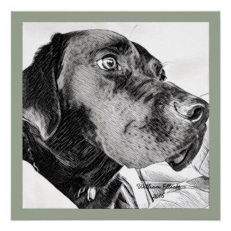Black Labrador Retriever Sketch Poster