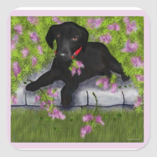 Black Labrador, Square Sticker
