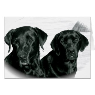 Black Labs Cards
