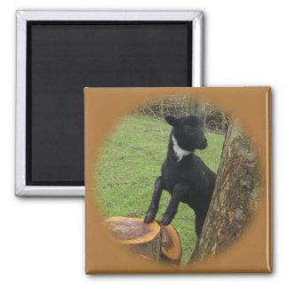 Black Lamb 2 Inch Square Magnet