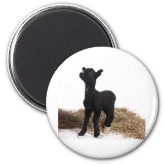 black lamb magnet