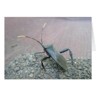 Black Leaf-footed Bug - Coreidae Card