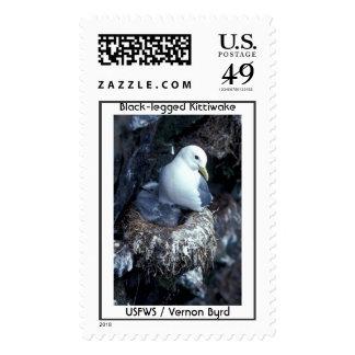 Black-legged Kittiwake Stamps