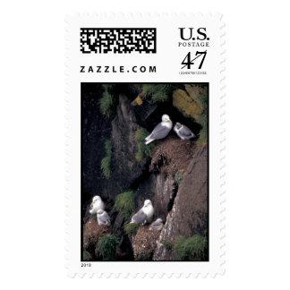 Black-legged Kittiwakes on Hall Island   Postage Stamp