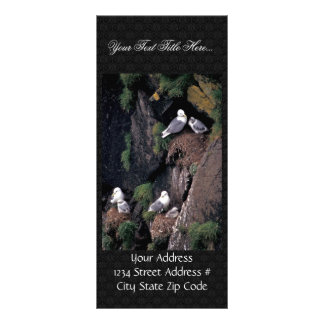 Black-legged kittiwakes on Hall Island Rack Cards