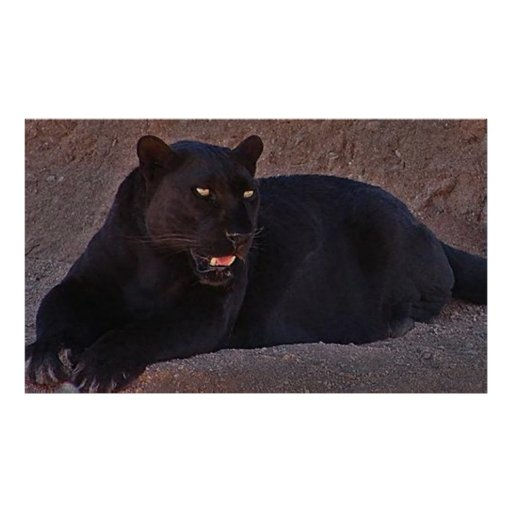 BLACK LEOPARD POSTERS
