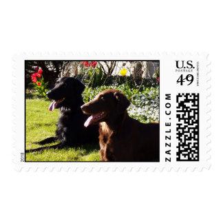 Black & Liver Flatcoat stamps