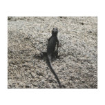 Black Lizard Canvas Print