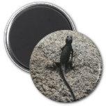 Black Lizard Magnet