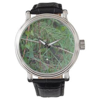 black lizard on reed stem florida plant wrist watches