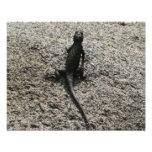 Black Lizard Photo Print