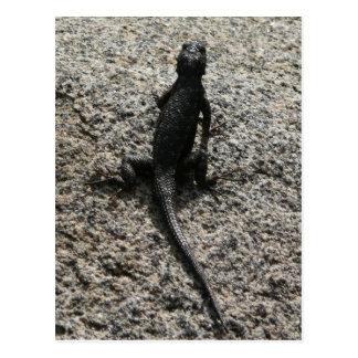 Black Lizard Postcard