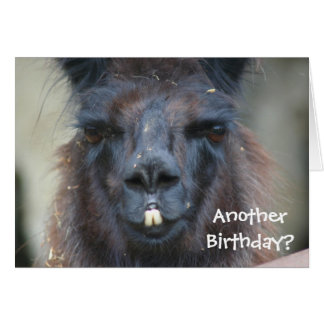 Black Llama Animal Funny Birthday Card