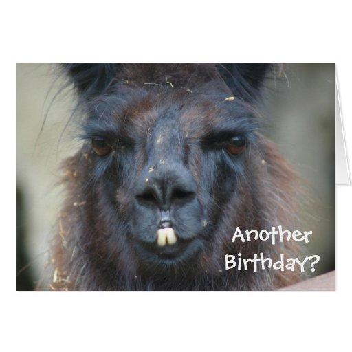 Black Llama Animal Funny Birthday Card