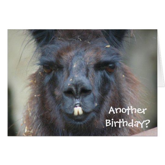 Black Llama Animal Funny Birthday Card Zazzlecom