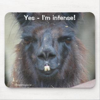 Black Llama I'm Intense Funny Animal Mousepad