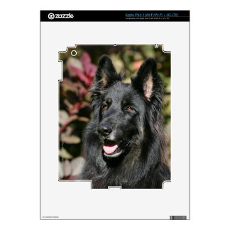 Black Long Haired German Shepherd Skin For iPad 3
