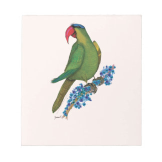 black lored parrot, tony fernandes notepad