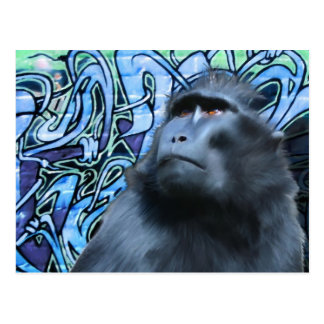 Black Macaque Post Card